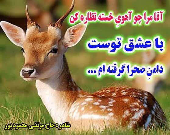 دههی کرامت رباعی زیارت امام رضا(ع)